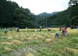 2008稲刈り2.jpgのサムネール画像