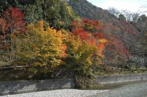 83紅葉真っ盛り.JPG