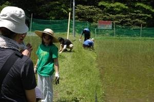 もくもくと草を刈る.JPG